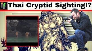 Thai Cryptid sighting. What were the Ewok creatures of Krabi?