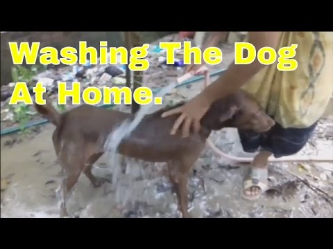 Funny Dogs just don't want to bath || Funny dog bathing compilation ||How to Bathe Your Dog At Home.