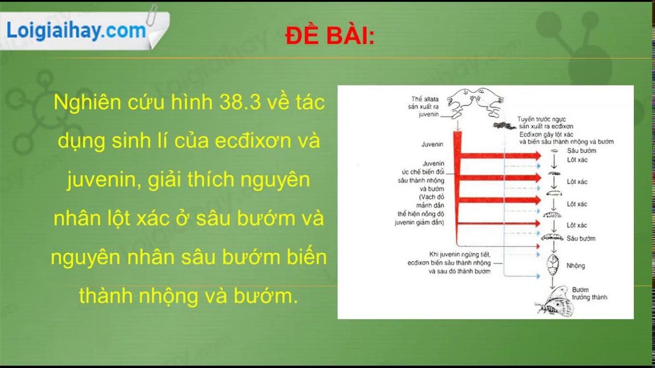 Nghiên cứu hình 38.3 về tác dụng sinh lí của ecđixơn và juvenin, giải thích  nguyên nhân lột xác ở sâu bướm và nguyên nhân sâu bướm biến thành nhộng và  bướm.
