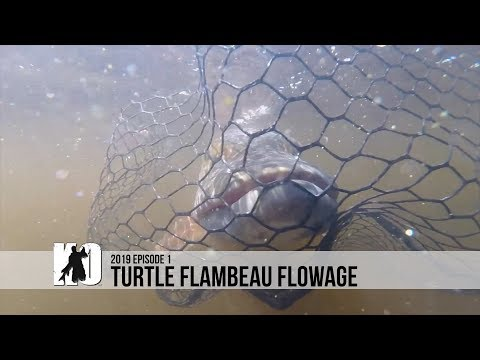 The Turtle Flambeau Flowage Holds BIG Muskies - Episode 1