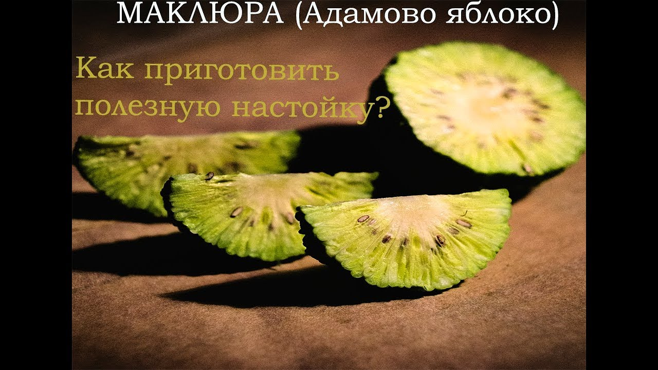 адамово яблоко рецепт настойки