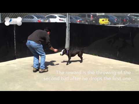 Training a Dog to Drop an Object on Command