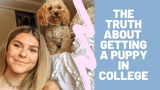 getting a puppy in college: advice, essentials + meet Teddy the Cockapoo