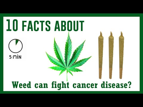 Did you know this about weed? if you smoke, must watch | The Little Curiosity
