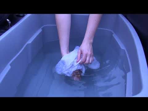 A Horn Shark Rescue Story
