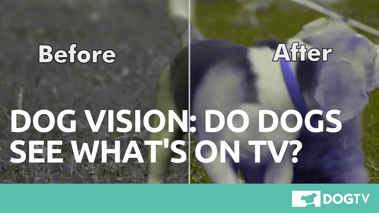 Dog Vision Tv Channel Especially Created For Dogs Dogtv Doovi