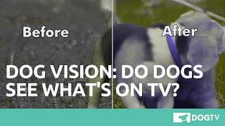 Dog Vision: TV Channel Especially Created For Dogs [DogTV]