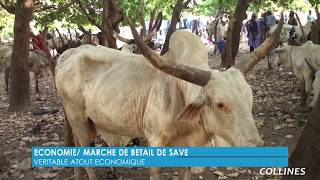 BENIN / ECONOMIE MARCHE DE BETAIL DE SAVE