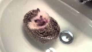 Ежик в ту... в ванне!