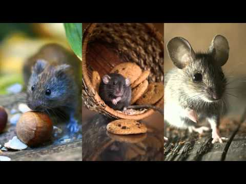 Rodent Control 916-226...