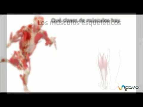 Clases de músculos del cuerpo humano - YouTube