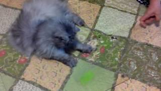 Кошке 14 лет!!!