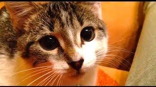 РЕАЛЬНЫЙ Кот из Шрека / REAL Shrek cute cat