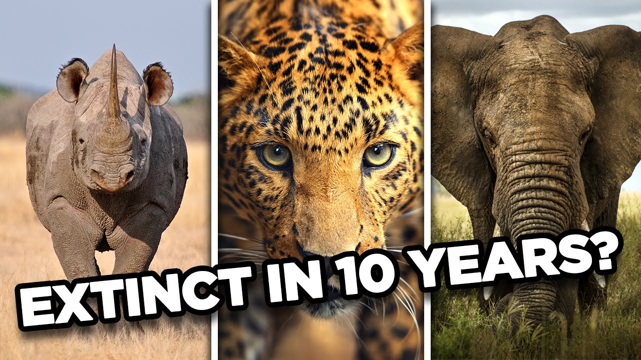 10 animals that may go extinct in the next 10 years youtube