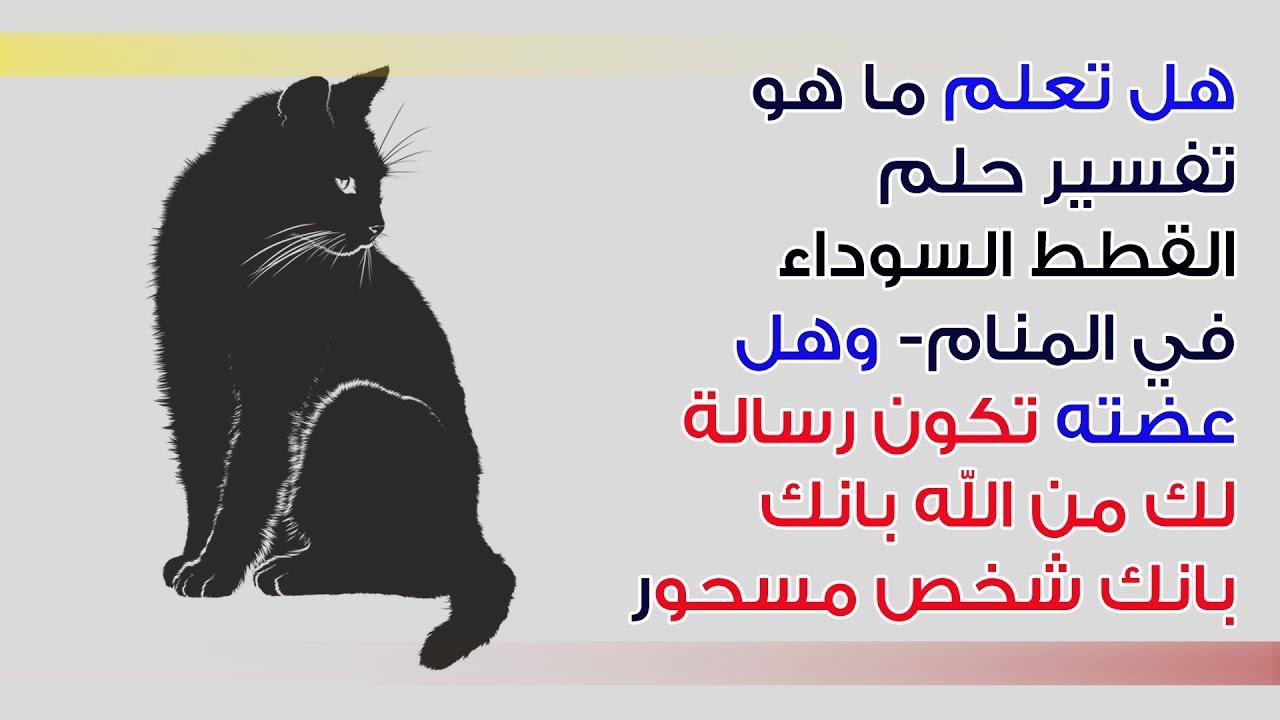 القطة السوداء في المنام