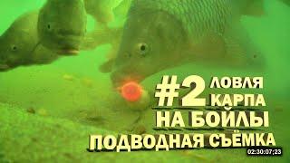 Ловля карпа на бойлы 2 подводная съёмка Видео 4К