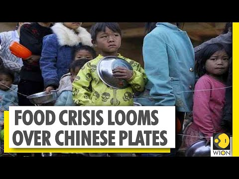 China's flood of woes | 2.3 million companies shut down | World News