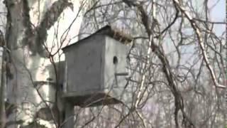 В Ярославле прокуратура нашла резиновый дом(, 2015-04-07T02:05:38.000Z)