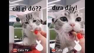 cats tv | chó mèo hài hước tham ăn nên rất dễ dãi - tik tok trung quốc HD