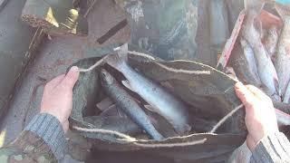 Рыбалка на Камчатке и СВП Бриз