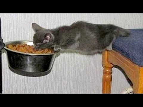 Animals are so funny you just can't stop laughing - Funny animal compilation