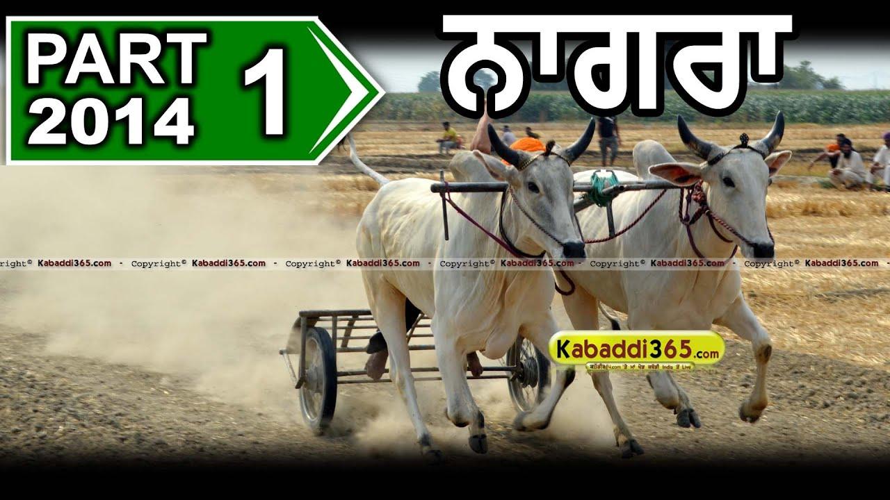 Part 1 Nagra (Ludhiana) Ox Race 11 May 2014 By Kabaddi365 com