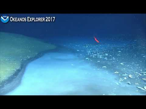 Okeanos Explorer Video Bite: Newly Discovered Brine River Captivates NOAA Scientists