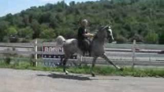Gray horse.wmv