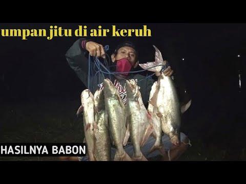 Umpan Jitu Ikan Patin Di Air Keruh Hasilnya Babon Youtube