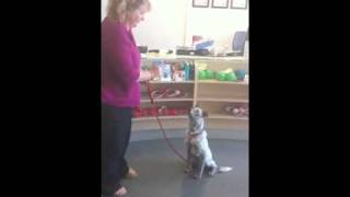 Deaf Dog Training - With A Big Leash Remote Dog Training Collar