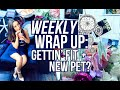 Weekly Wrap Up: Going Vegan + New Pet? | Caitlin Bea