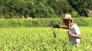 悦ちゃん農園 http://www.etsu-nitamai.jp/ 奥出雲で作られる仁多米。 ...