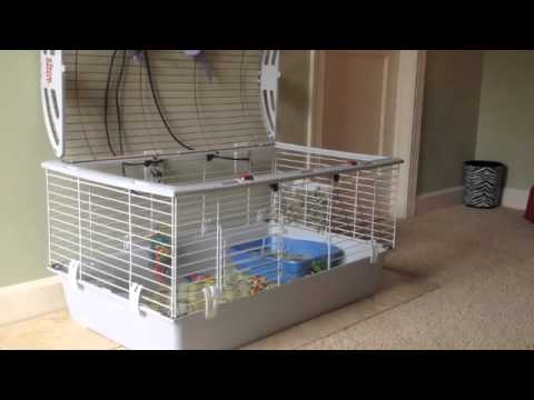 Rabbit Litterbox Training - YouTube