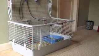 Rabbit Litterbox Training