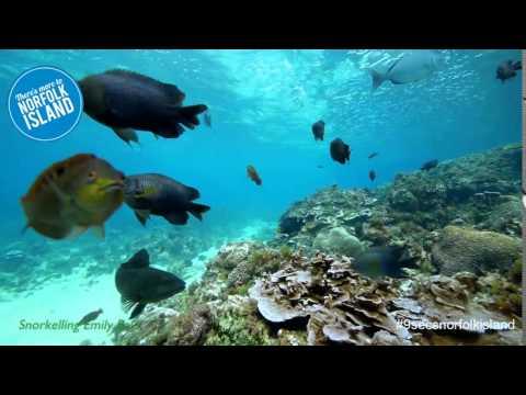 Norfolk Island Snorkeling in Emily Bay