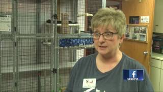 Local shelter holding special adoption event