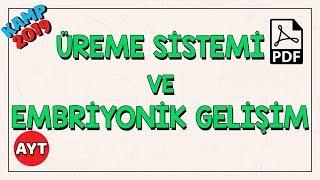 Üreme Sistemi ve Embriyonik Gelişim  AYT Biyoloji