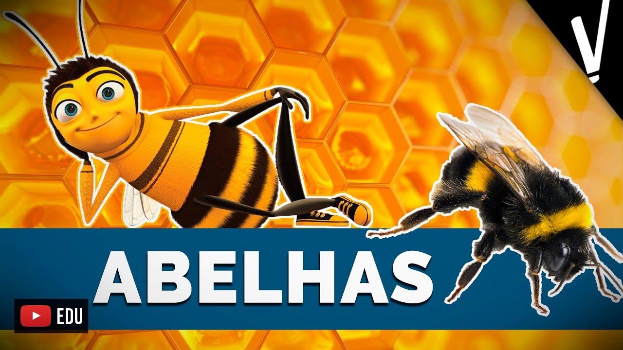 ABELHAS   Biologia - YouTube