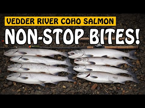 NON-STOP COHO SALMON BITES! A Great Day Float Fishing On The Vedder River | Fishing With Rod