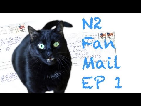 N2 the Talking Cat Fan Mail Ep1