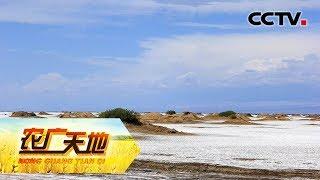 《农广天地》 20190711 盐碱地闯出致富路| CCTV农业