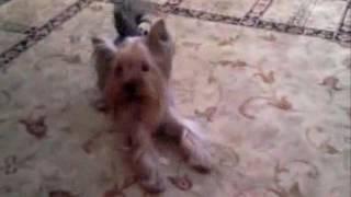 Груминг собак на дому, профессиональная стрижка собаки, как подстричь собаку качественно и недорого(Запишитесь на модную стрижку прямо сейчас: https://vk.cc/6d4Cza В этом видео вы узнаете: - что такое груминг собак;..., 2017-02-08T13:12:15.000Z)