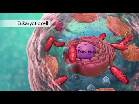 biology:-cell-structure-i-nucleus-medical-media