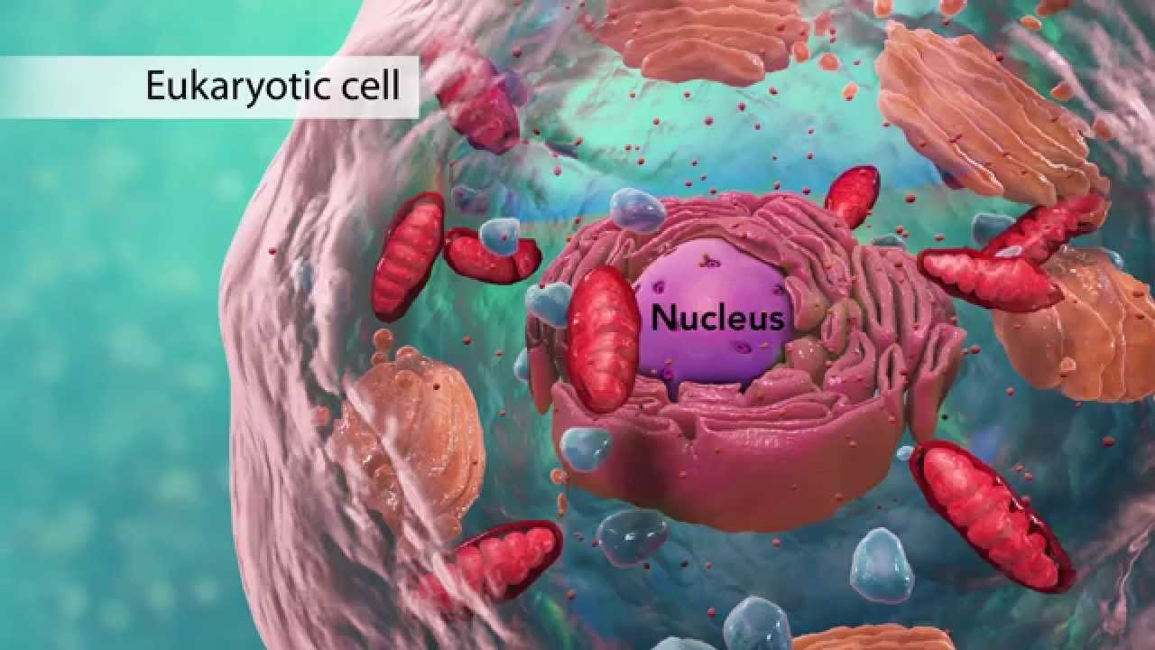 3d animal cell diagram car horn installation biology: structure i nucleus medical media - youtube