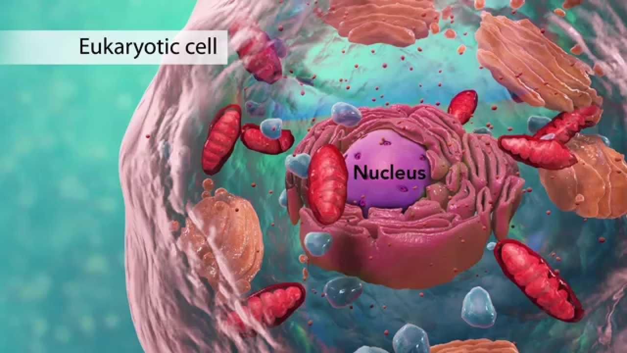 medium resolution of diagram of cell organelle test