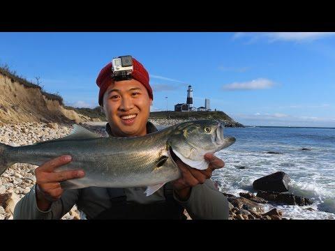 Catching BIG Fish In America's Best Surf Fishing Spot: Montauk Light House, NY
