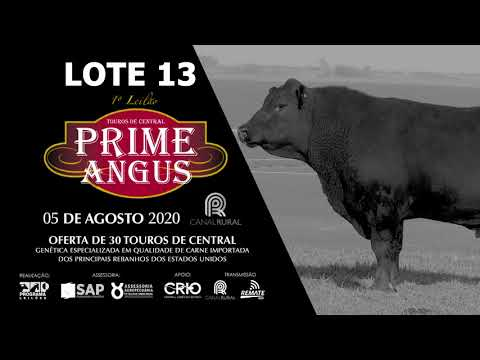 LOTE 13    BLACK OPAL TE897 ENTRECOTE Prod  Agência El Campo