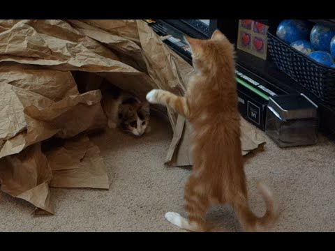 CUTE KITTENS Playing with Paper Mountain