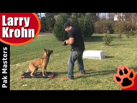 Incredible dog training obedience with Luca the Belgian Malinois