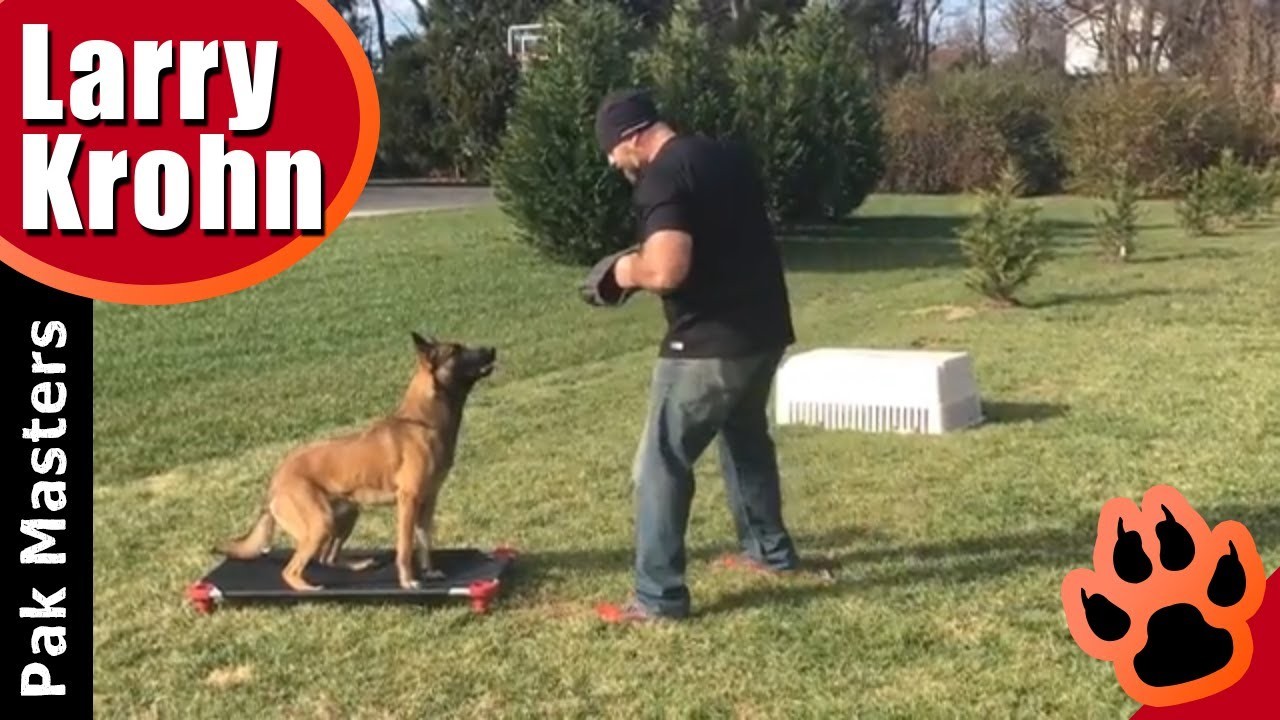 Incredible Dog Training Obedience With Luca The Belgian Malinois Youtube